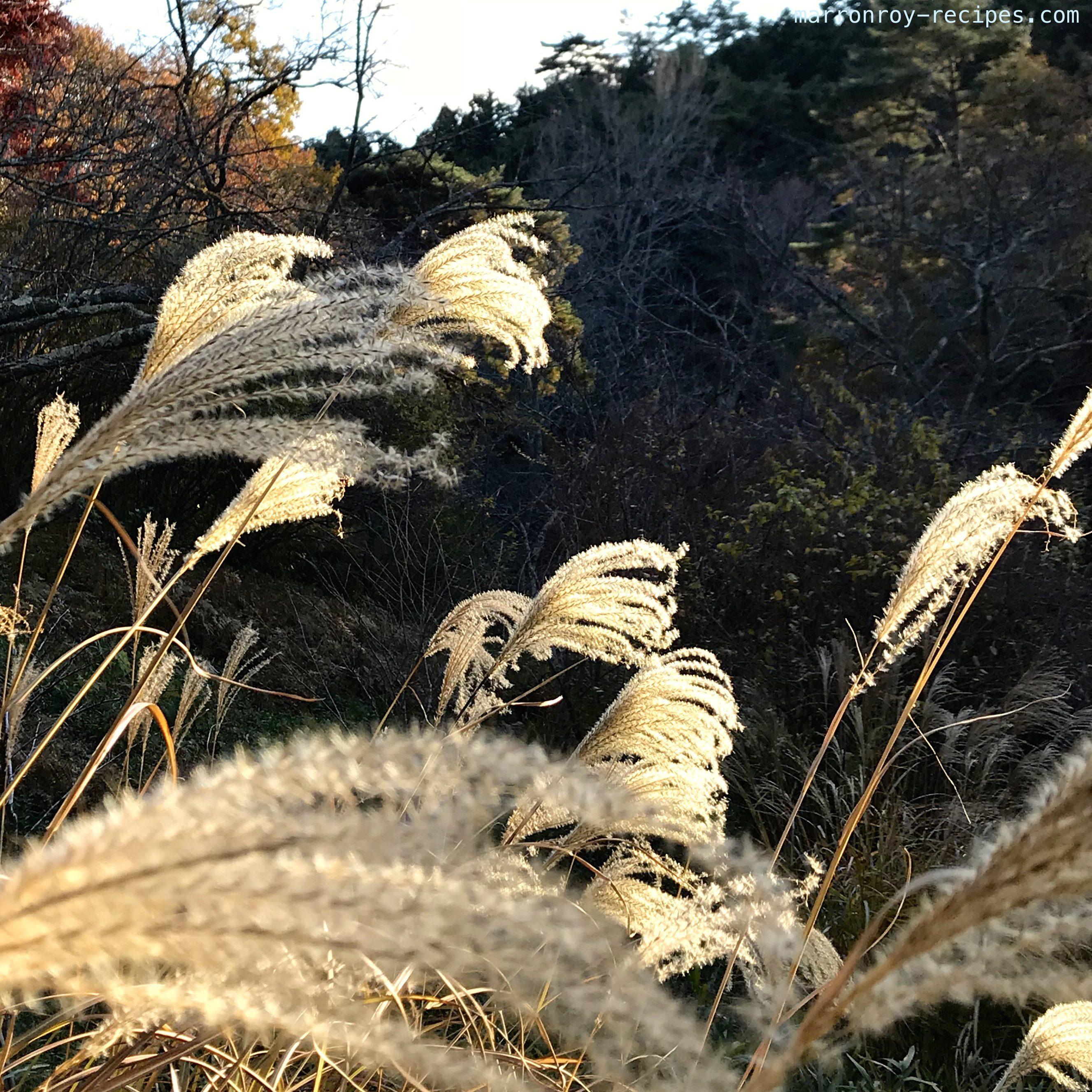 ふらり散歩〜秋の森林植物園〜